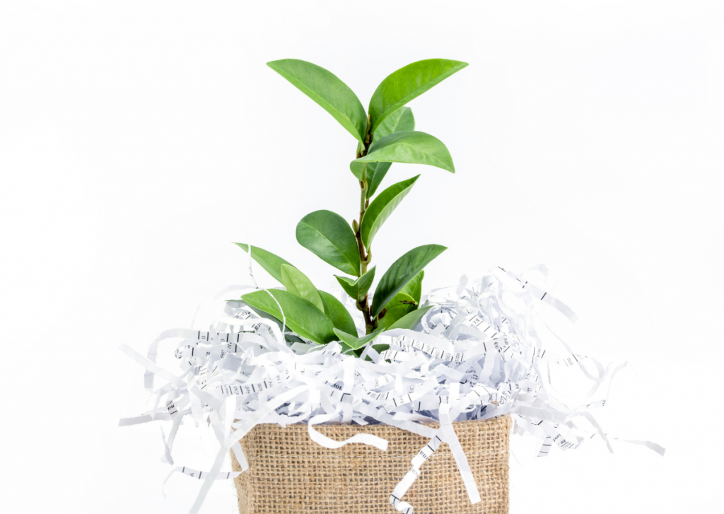 plant growing out of planter with shredded paper bedding with white background